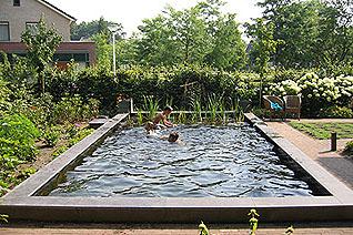 Professioneel natuur zwembad venhuis vijverbouw bv - Klein zwembad in de kleine tuin ...